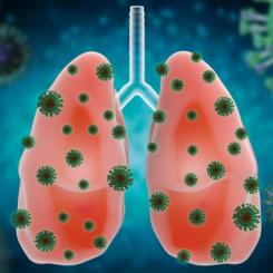 Covid-19 et transplantation pulmonaire. Discussion et indications (Dr Glorion Matthieu)